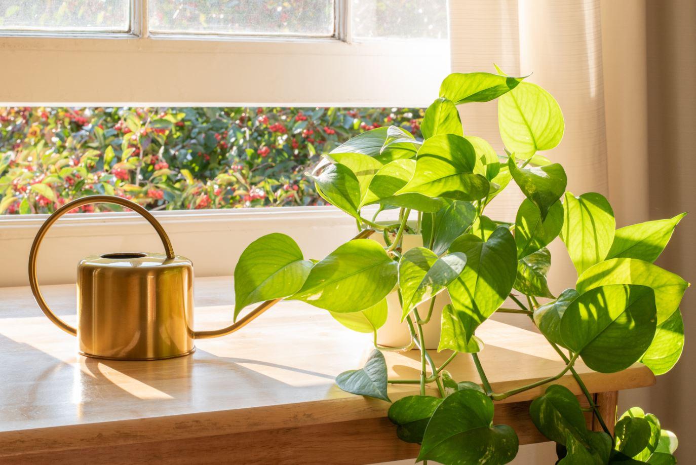 plantas para ambiente interno